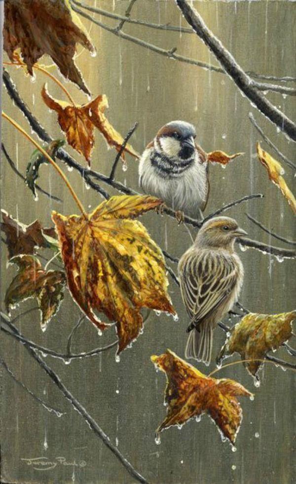 Birds in the rain. Fall.