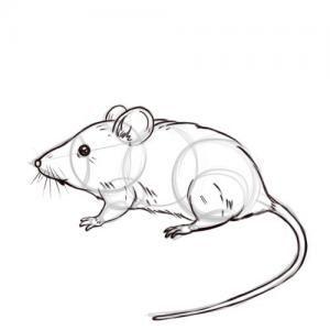 Best 25 Como dibujar un raton ideas on Pinterest  Caricaturas