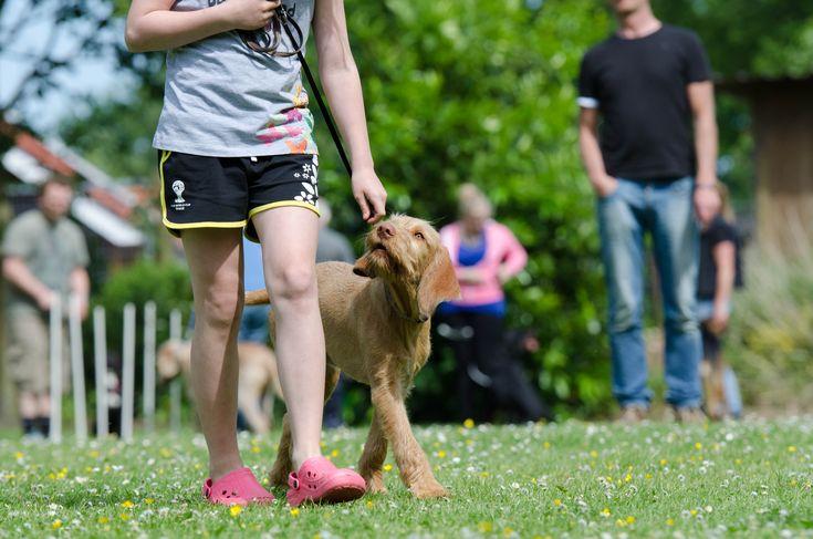A megfelelő nevelésnek fontos szerepe van abban, hogy a gazdi és kutyája között boldog és jó kapcsolat alakulhasson ki
