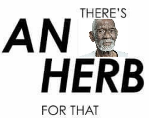 List of Dr. Sebi Approved Alkaline Vegan Herbs And Illnesses They Cure