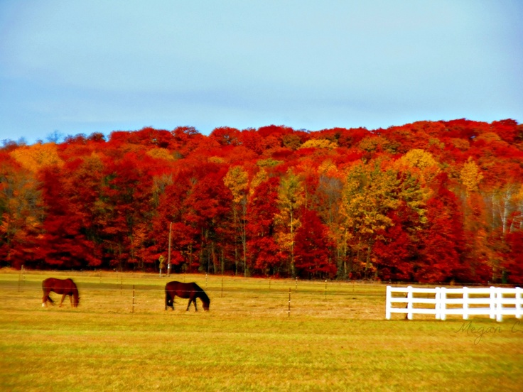 Tranquil horses grazing against a backdrop of fiery fall colors in Wisconsin.  That's certainly one way to savor autumn, find more on the Fall Color  Report!