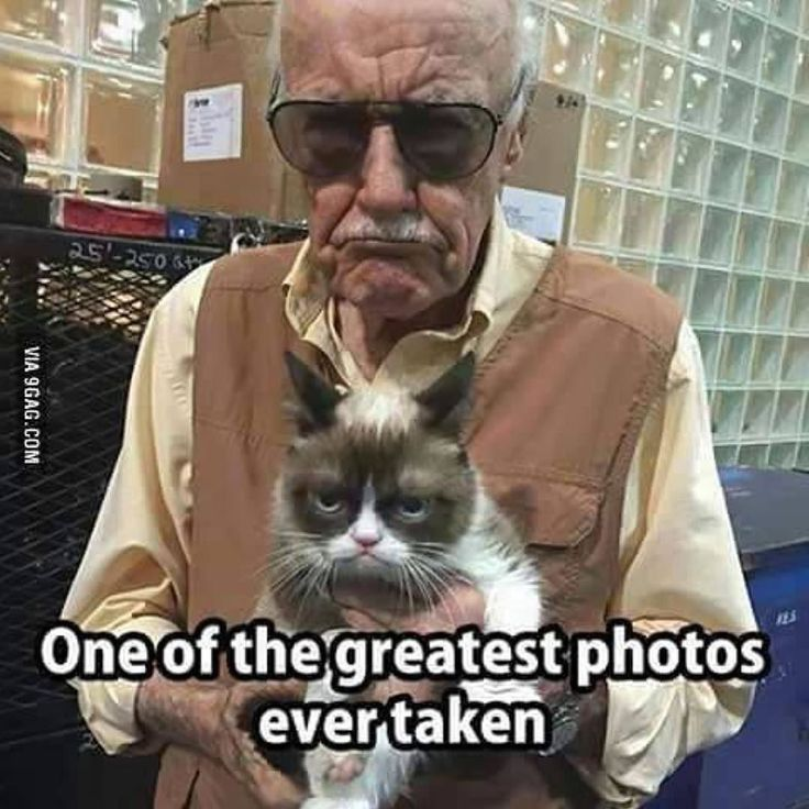 So are grumpy cat memes Marvel productions?