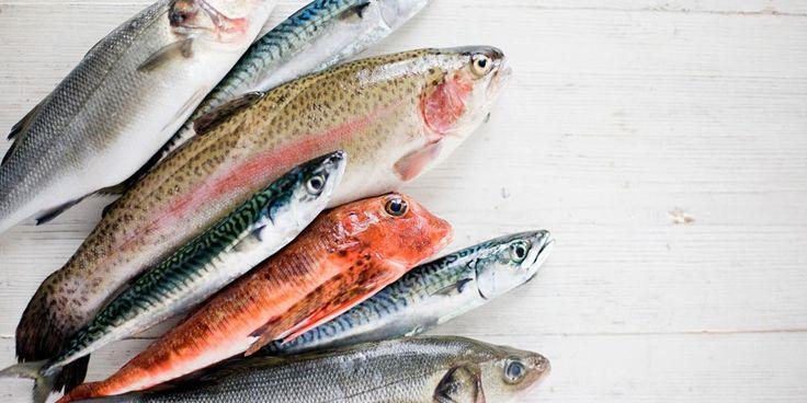 Εποχικοτητα ψαριών