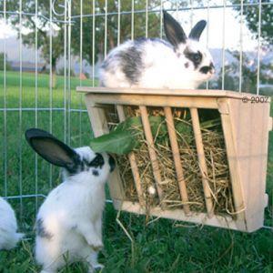 Un râtelier à foin (dans lequel le lapin ne peut pas se coincer la tête, tout en accédant aisément au foin).