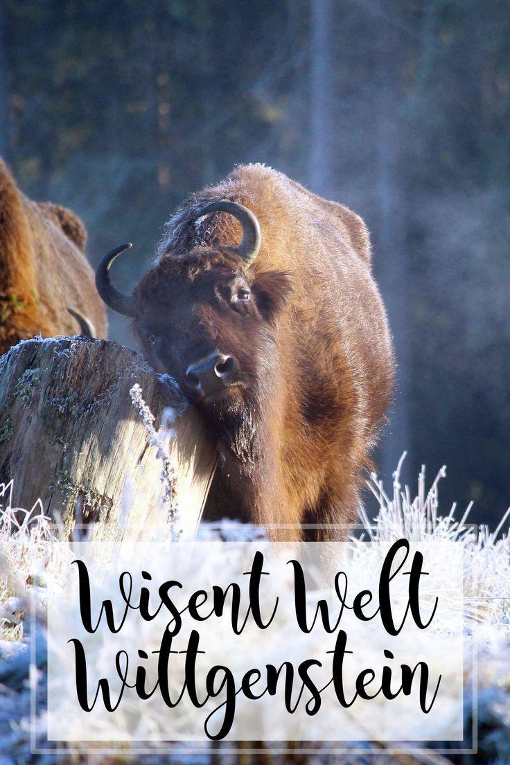 Ein wunderschöner Winter-Ausflug in Nordrhein-Westfalen: die Wiesen Welt Wittgenstein in Bad Berlebug (Erfahrungsbericht und Tipps)