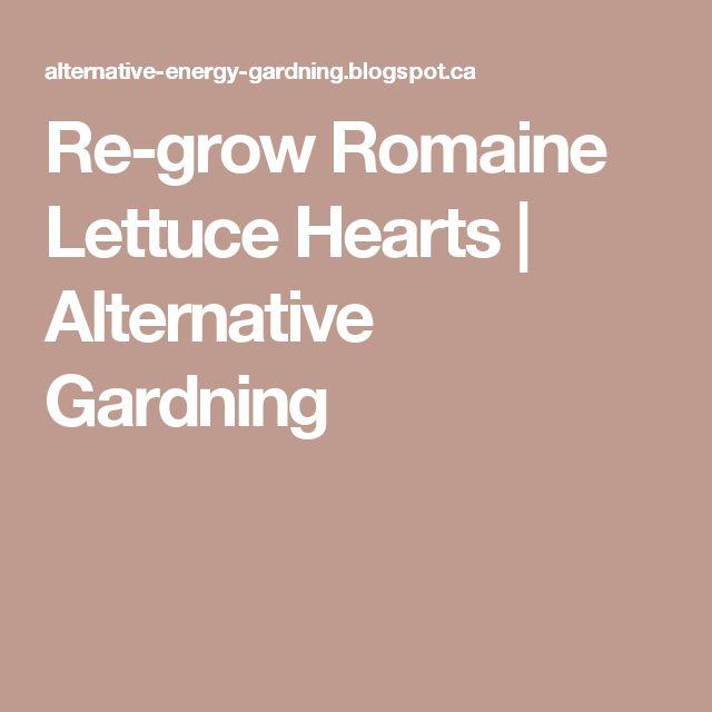 Best 25 Regrow Romaine Lettuce Ideas On Pinterest: Best 25+ Grow Romaine Lettuce Ideas On Pinterest