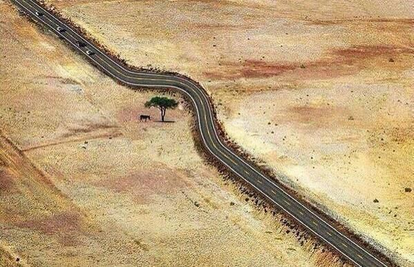 Save every tree as if it's the last