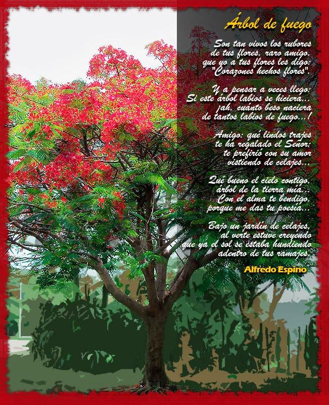 Poema rbol de fuego de alfredo espino poeta for Arbol de fuego jardin