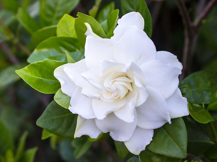 Significado das 10 flores mais usadas no casamento