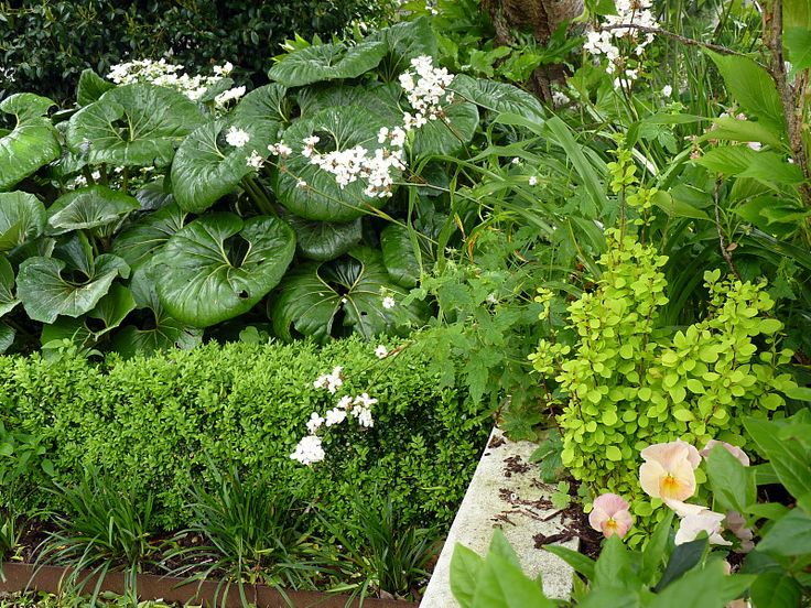 A garden for all seasons | Beauchamp, HEDGE Garden Design & Nursery