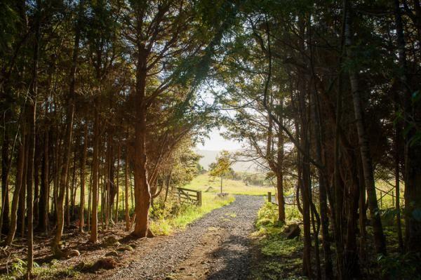 Highfield Forest Retreat, Kauri Coast » Canopy Camping