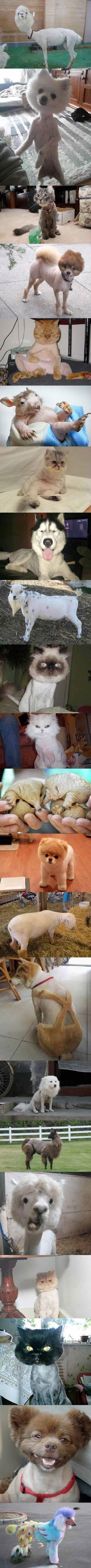 Adorable Half-Shaved Animals