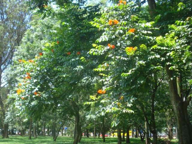 En medio de la ciudad un pequeño respiro de tranquilidad, Parque La Sabana, San José de Costa Rica.