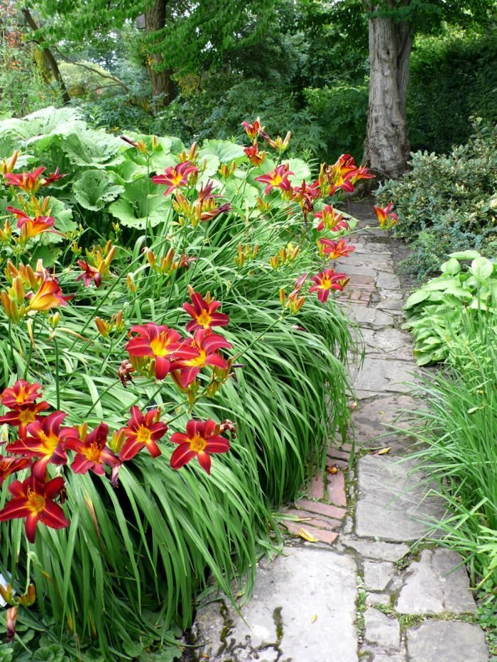 Rough stone and brick path flanked by hemerocallis and for Garden path