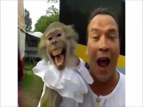Animals Funny Video