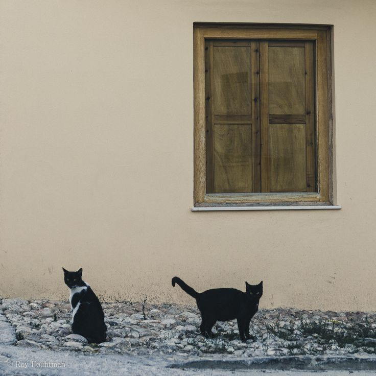 Cats of Spetses -by Roy Fochtman on 500px