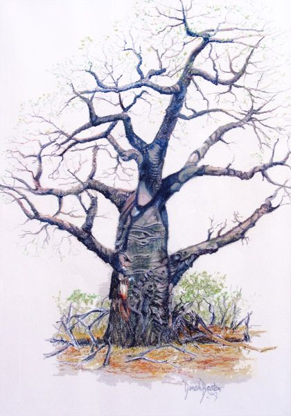 Baobab - Lowveld, Zimbabwe. Soft Pastels on Paper by Dinah Beaton