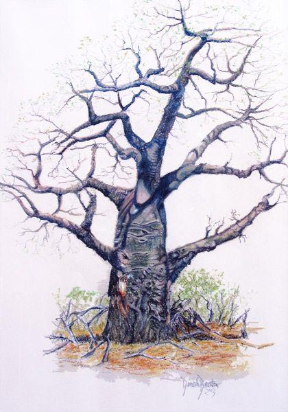 Baobab - Lowveld, Zimbabwe