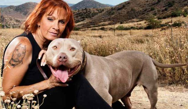 Five Things You Didn T Know About Tia Torres With Images Pit Bulls Parolees Pitbulls Animal Planet