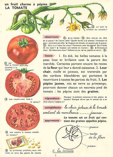 Leçons de choses Nathan : la tomate