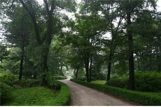 전문전시원 숲길 모습  광릉수목원