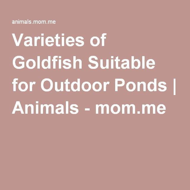 Varieties of Goldfish Suitable for Outdoor Ponds | Animals - mom.me