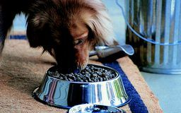 Making fresh, organic, homemade dog food for your large-breed pooch is a great way to assure that your dog is nourished and happy. Whether you choose to exclusively feed your dog homemade food or ...