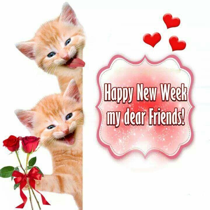 https://s-media-cache-ak0.pinimg.com/736x/aa/a6/0e/aaa60ea5fee1d39cad617eebfc33f6fc--happy-weekend-happy-monday.jpg