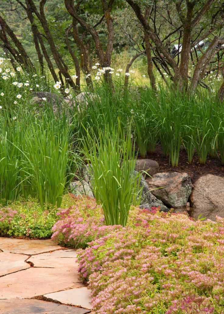 17 best images about landscape with grasses on pinterest for Ornamental grass with pink flowers