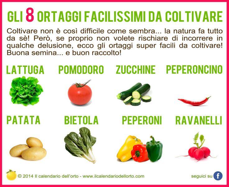 Gli 8 ortaggi facilissimi da coltivare