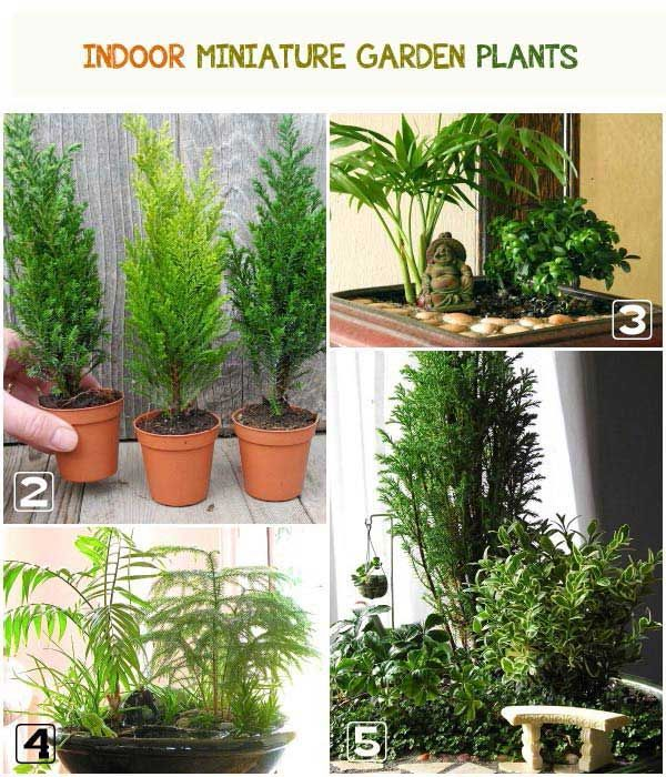 How to choose living plants for a miniature garden for Choosing plants for landscaping