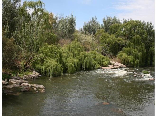 Vaal River - Parys