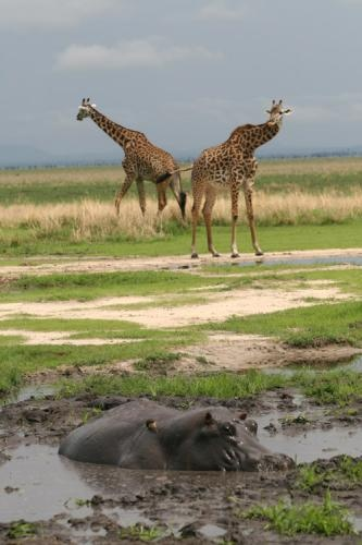 Be sure to pay close attention to the #mud...  | Holidays in Tanzania | Mbali Mbali Lodges and Camps