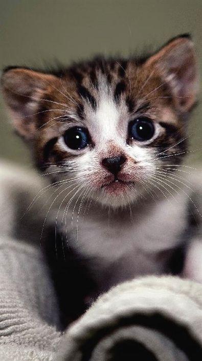 cute #kitten hat gerade ein tolles Bad genommen #cat #cutestkittens   – Cats