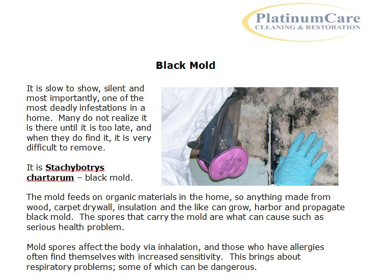 https://www.platinumcarecleaning.com/black-mold/ PlatinumCare Cleaning has everything needed to clean and remove black mold from the home.