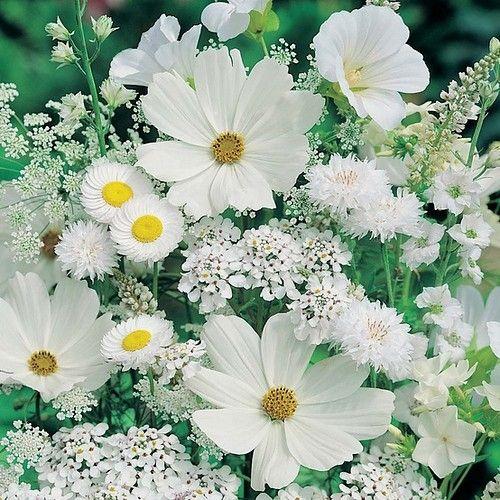 white garden for the evening