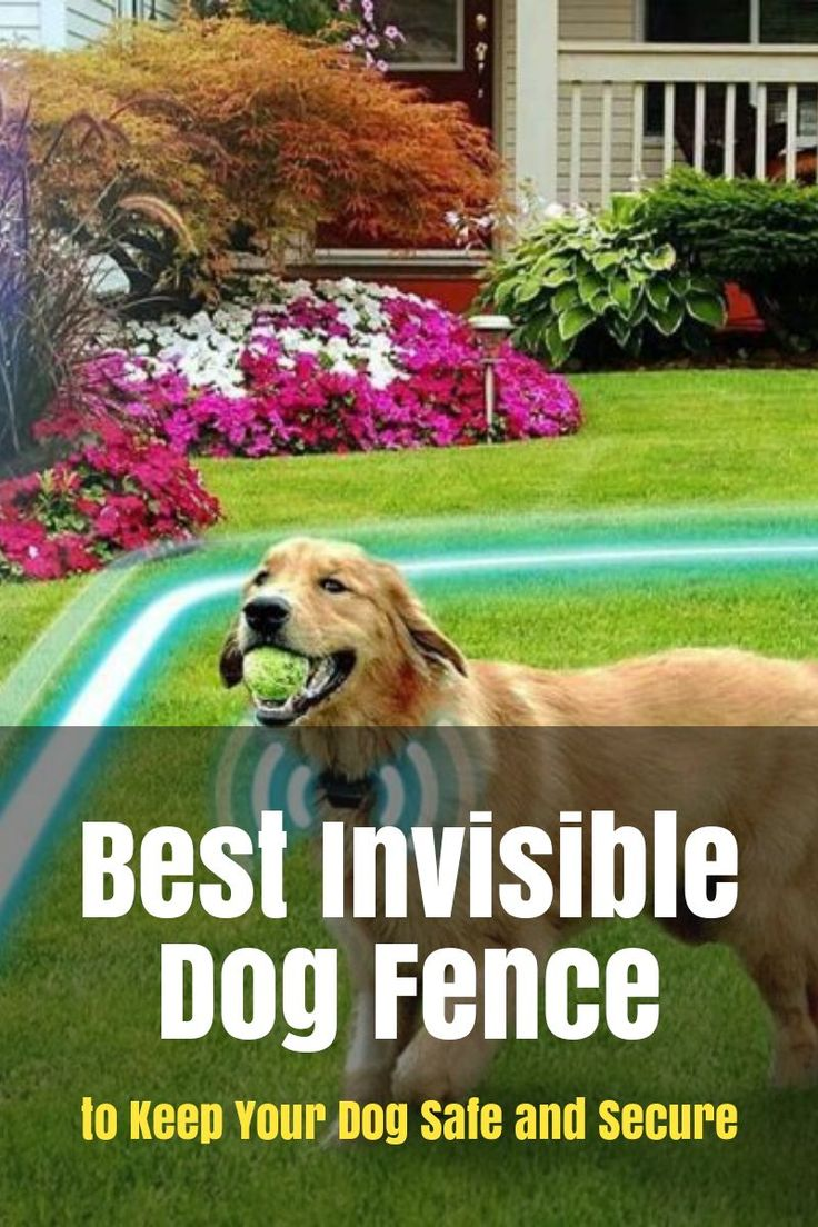 Best Invisible Dog Fence To Keep Your Dog Safe And Secure