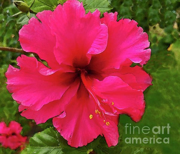 Early Spring Is The Time For Florida Plants And Flowers To Strut Their Stuff This Beautiful Hibiscus Bloom Is Almost Beautiful Flowers Hibiscus Flower Images