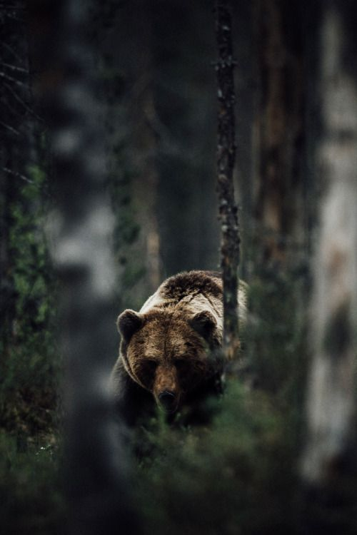 Photo Grizzly