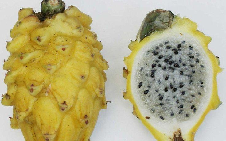 Altın kabuk beyaz eti ejderha meyve genellikle, küçük tatlı ve piyasada çok nadir bıraktı. Pitaya meyve aslında mavi ve yavaş olgunlaşır zaman sarı dönüm başladı. Bu meyve Güneydoğu Asya ulus yetiştirilir.