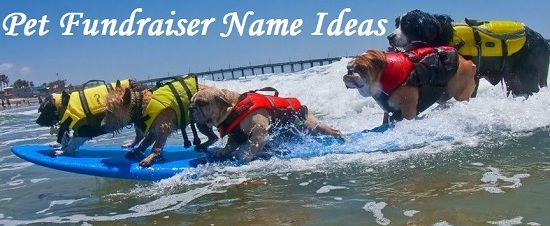 When doing a pet fundraiser, name ideas are very important because having a catchy name gives your event a nice hook. This list of pet fundraiser names covers