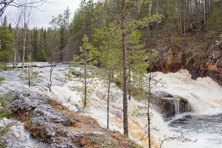 15.5.2015 oli vaikuttava tulva Kiutakönkäällä. Photo Paula Mikkonen