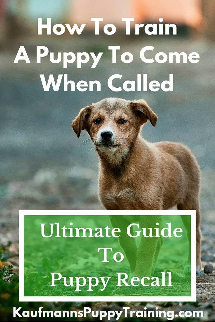 aaa91c661984cee26b770e8ca819c809 - How Do You Get A Puppy To Come When Called