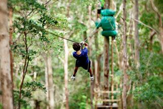 High Ropes and Flying Fox Adventure - Adult, Tamborine Mountain QLD | RedBalloon