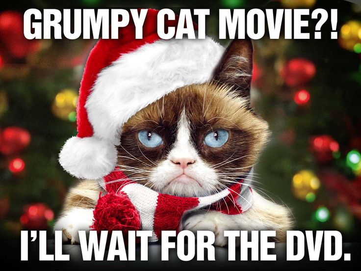 129 best Grumpy Cat Xmas images on Pinterest | Grumpy cat ...