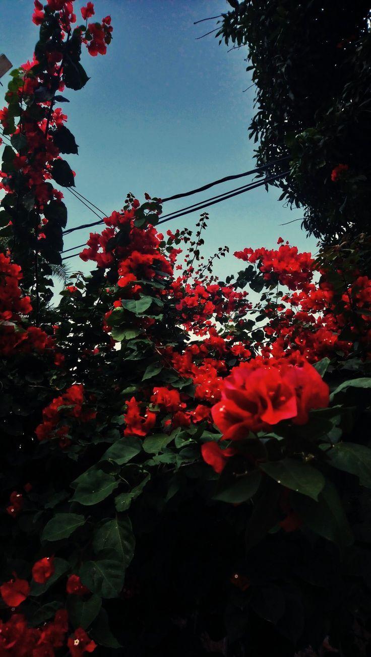 red flowers love flowers