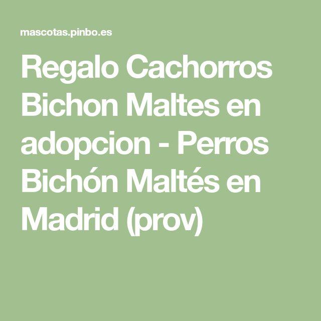 Regalo Cachorros Bichon Maltes en adopcion - Perros Bichón Maltés en Madrid (prov)