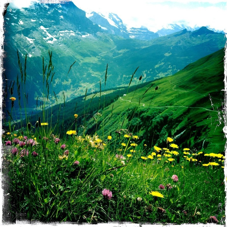 Took this on themountain called First, Swiss Alps, Grindelwald, Bern.
