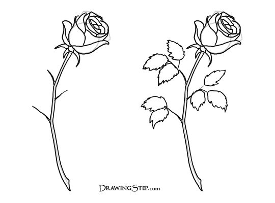 103 best sketching images on pinterest draw drawing and flower how to draw roses steps ccuart Image collections