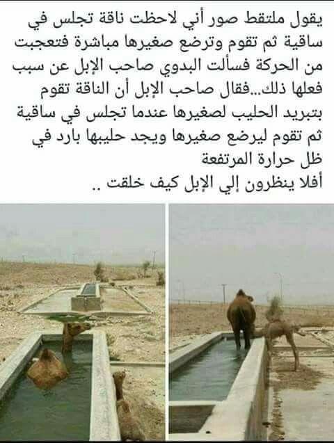 Pin By Selhawari On Shouq Elhawari